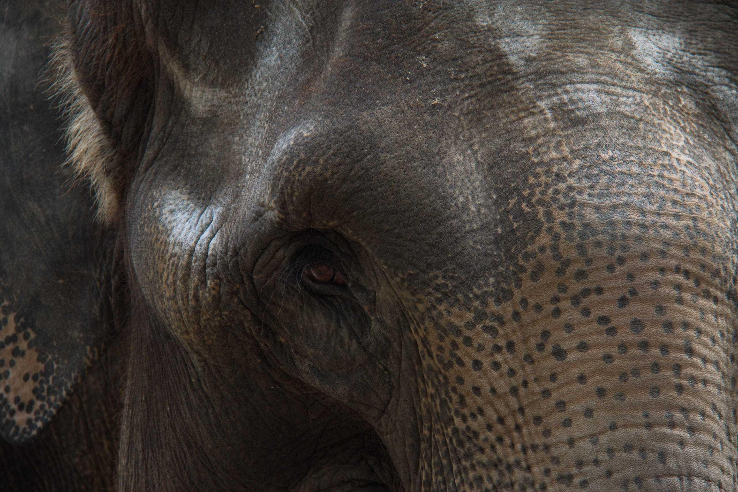 Elefantenporträt