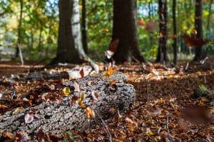 Die Blätter fallen
