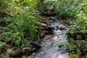 Kleiner Wasserlauf in Langzeitbelichtung. Das Wasser erscheint weich, links und rechts wilder Pflanzenbewuchs