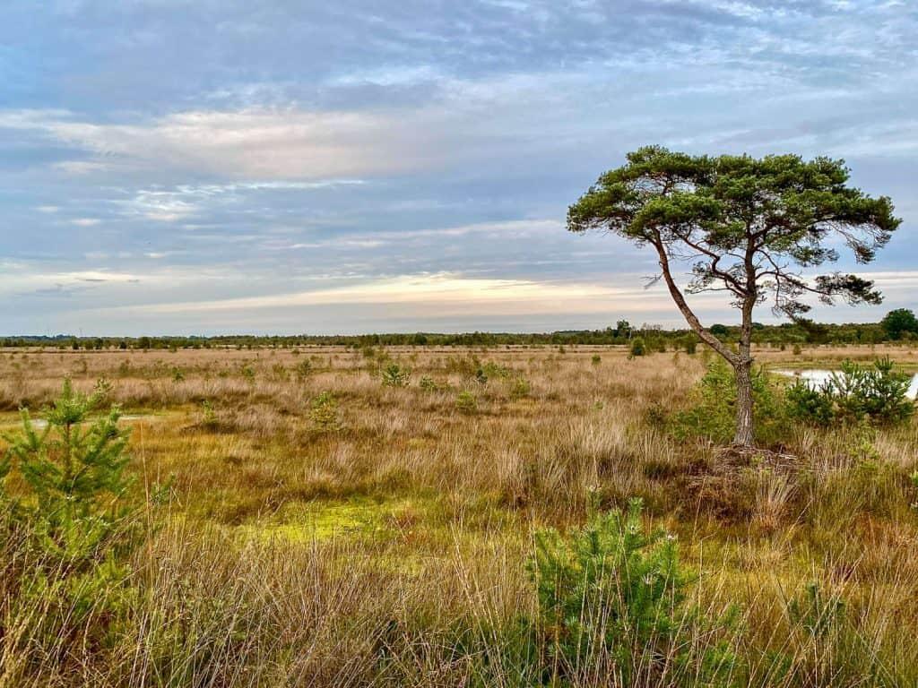Blick über die Freifläche des Moores. Rechts am Bildrand ein Baum