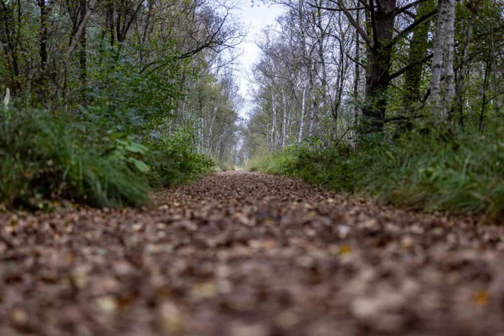 Weg zwischen Bäumen aus der Froschperspektive