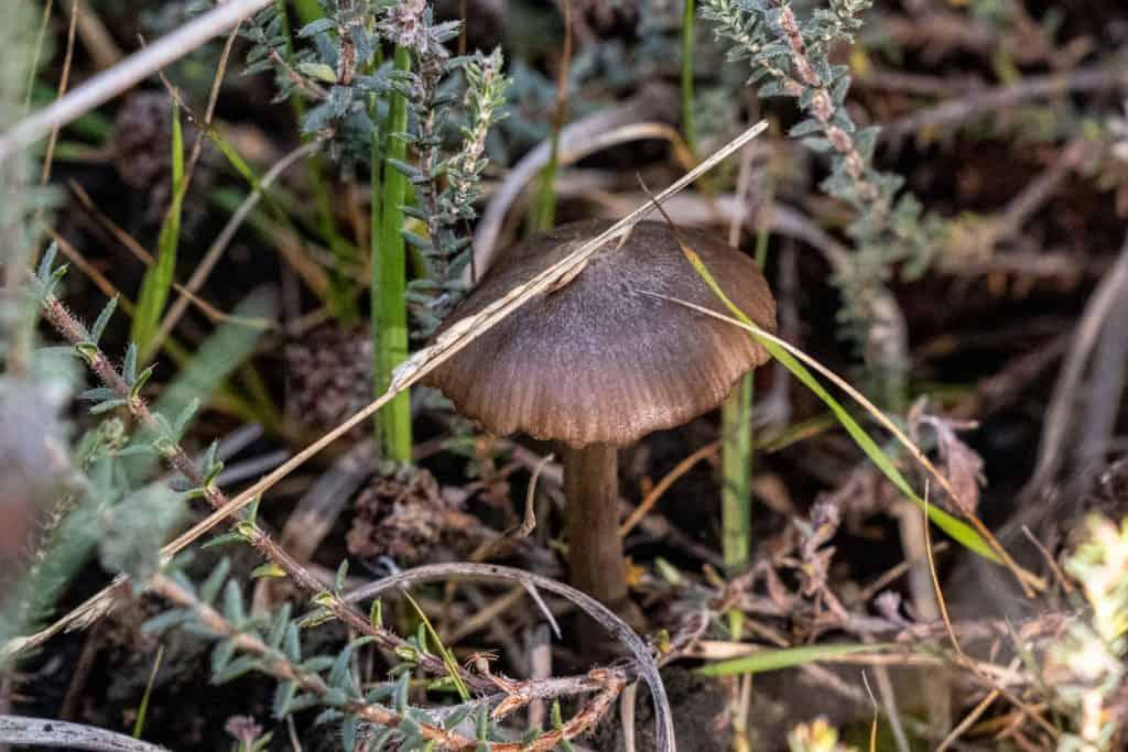 Pilz unter einigen Zweigen